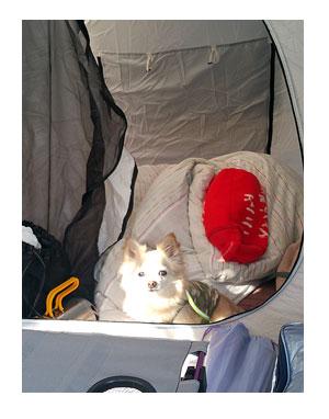 キャンプ ウェル 犬 わんこ 一緒 西丹沢 吠え ガウ