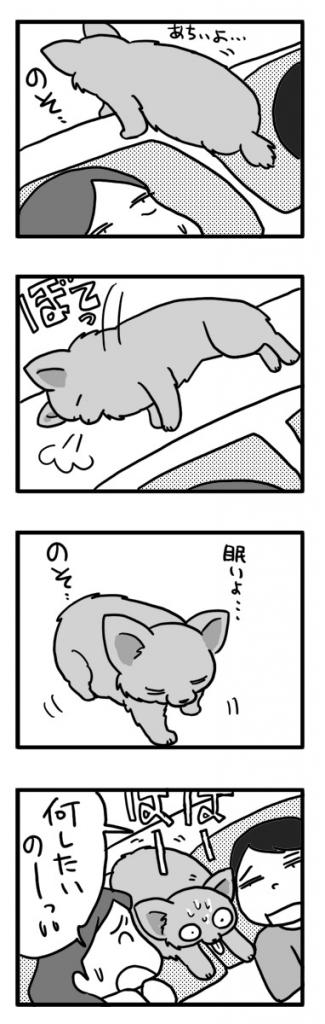 暑い 布団 チワワ 登って くっつき お尻 犬 福 まんが マンガ 漫画