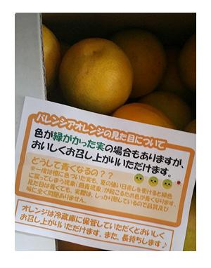 おれんじ バレンシア バレンシャ オレンジ みかん 和歌山
