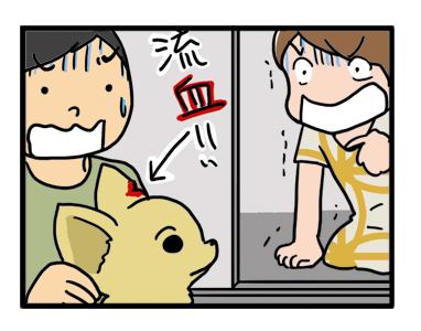 バリカン 流血 血 耳 犬 チワワ イラスト 絵 犬