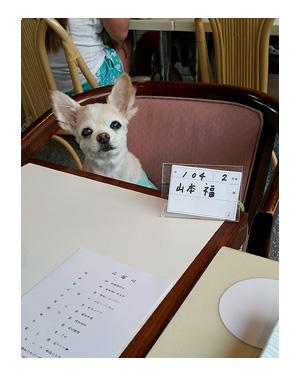 伊豆 いず 犬 専用 ホテル サンロード プール 水泳 一緒 泳 温泉 宿 旅行 漫画 まんが イラスト