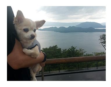 東北 秋田 十和田湖 発荷峠 展望台 夏 犬 チワワ 老犬 旅行 ペット 一緒 宿 車
