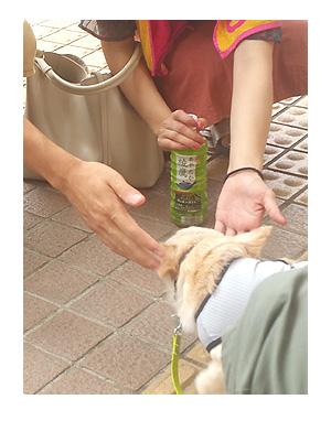 東北 秋田 鹿角 駅伝 花輪 温泉 スキー 夏 犬 チワワ 老犬 旅行 ペット 一緒 宿 車