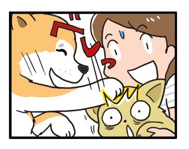 東北 秋田 十和田湖 秋田 秋田犬 あきたけん いぬ 夏 犬 チワワ 老犬 旅行 ペット