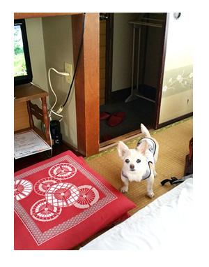 東北 仙台 宮城 伊達藩 せんだい 夏 犬 チワワ 老犬 旅行 ペット 一緒 宿 車