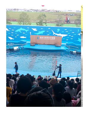 東北 仙台 水族館 仙台 うみの杜水族館 夏 犬 チワワ 老犬 旅行 ペット 一緒 宿 車