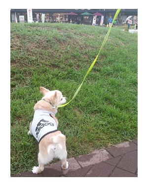 東北 SA サービス 夏 犬 チワワ 老犬 旅行 ペット 一緒 宿 車