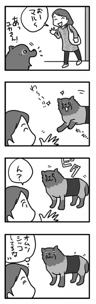 マル 実家 犬 ポメ 老犬 オムツ 老人 犬 まんが 漫画 マンガ イラ