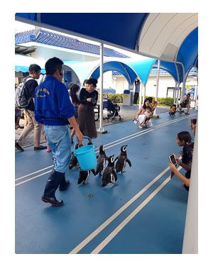 石川 バイク ツーリング 能登島 のとじま のどじま 水族館 シッター ペット 犬 チワワ 老犬 旅行 ペット 預 家