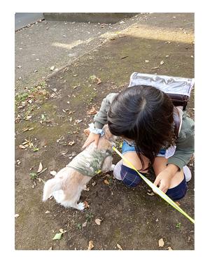 福 チワワ 撫でられ 散歩 吠える ガウリン 犬 小学生