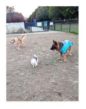 昭和 記念 公園 ドッグラン 犬 チワワ ガウリン 吠え 漫画 犬