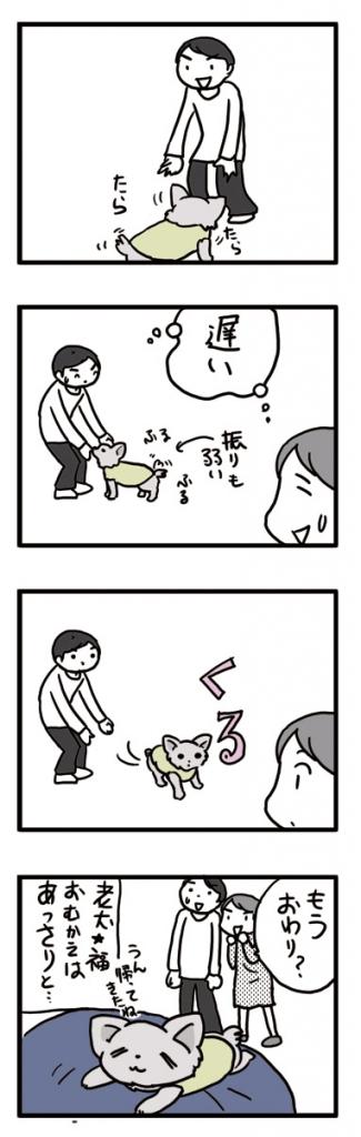 老犬 チワワ 迎え あっさり 犬 まんが マンガ 漫画
