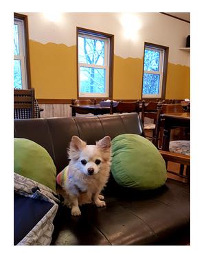 那須 なす 那須高原 旅行 温泉 ペット 犬 チワワ 老犬 旅行 バイキング ホテル 飲 呑 放題 イラスト わんこ ワンコ 漫画