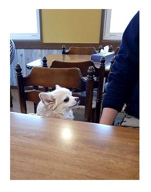 那須 なす 那須高原 旅行 温泉 ペット 犬 チワワ 老犬 旅行 レスタ 宿泊 宿 犬連れ イラスト わんこ ワンコ 漫画