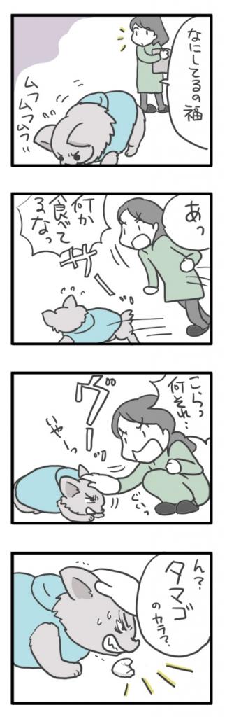 チワワ 老犬 福 ガウリン 吠 宝物 台所 落とし物 爺 老 ワン 犬 まんが 漫画 マンガ