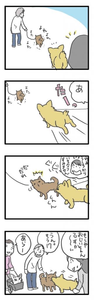 チワワ 老犬 福 ガウリン 吠 散歩 仲間 嗅ぐ 爺 老 ワン 犬 まんが 漫画 マンガ