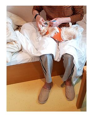 チワワ 老犬 福 ガウリン 吠 四国 徳島 香川 車 連休 フェリー ペット 同伴 個室 爺 老 ワン 犬 まんが 漫画 マンガ