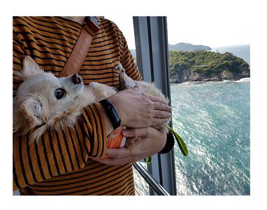 四国 徳島 香川 さわら サワラ 刺身 徳島 ととや 犬 まんが 漫画 マンガ