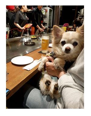 チワワ 老犬 福 吠 広島 原爆 記念 お好み 広島焼 こころ 和心 ペット 泊 爺 犬 まんが 漫画 マンガ