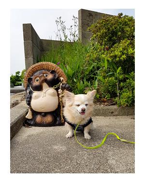 チワワ 老犬 福 吠 岡山 頭島 かしら 瀬戸内 貸し 別荘 島 車 泊 ペット 泊 爺 犬 まんが 漫画 マンガ