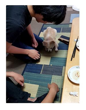 チワワ 老犬 福 吠 たこ タコ 焼 ふたご 犬好 初対面 来客 爺 犬 まんが 漫画 マンガ