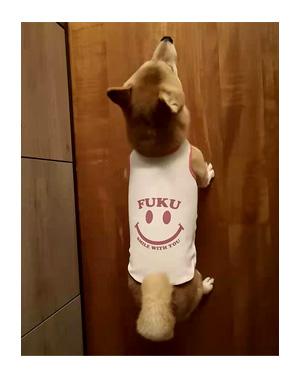 チワワ 老犬 福 吠  シニア ペット 柴 香港 外国 わんこ ワンコ 服 シャツ 冷感 名前 名入 犬 まんが 漫画 マンガ