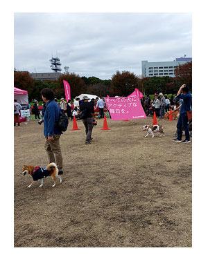 チワワ 老犬 福 吠 旅 しっぽ ドッグ フェスタ イベント 立川 sippo シニア ペット 心臓 爺 犬 まんが 漫画 マンガ