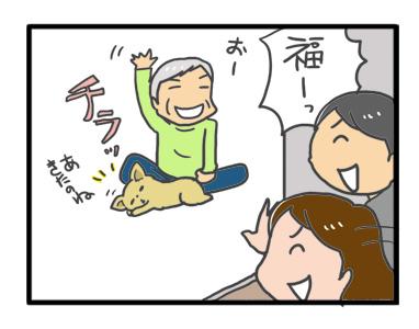 チワワ 老犬 福 吠 旅行 預 実家 帰宅後 馴染 爺 犬 まんが 漫画 マンガ