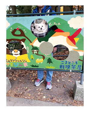 チワワ わんこ 老犬 福 吠 シニア ペット 高尾山 たかお 紅葉 秋 山 登山 犬 イラスト 絵 まんが 漫画 マンガ