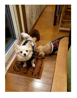 那須 栃木 なす 高原 れすた 犬連れ 旅行 犬ok 旅 チワワ わんこ おじい 老犬 福 吠 シニア ペット 心臓 犬 イラスト 絵 まんが 漫画 マンガ
