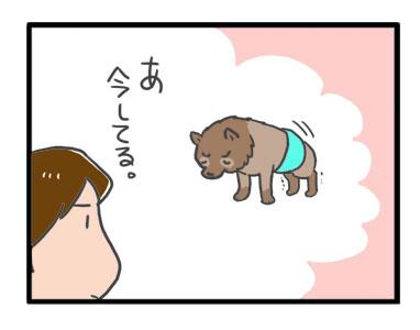 ポメ ポメラニアン 老犬 尿 モレ しっこ トイレ おむつ オムツ パッド 蒸れ シニア ペット 咳 爺 犬 まんが 漫画 マンガ