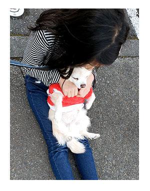 チワワ 老犬 福 吠 小学生 犬 慣れ 撫で 嬉しい ガウリン 人嫌い 爺 犬 まんが 漫画 マンガ