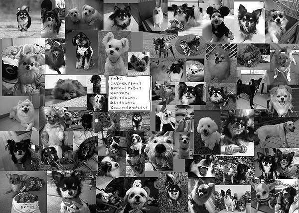 犬 チワワ 吠える ガウ ほえる ワンコ ガウリン 福 ふく イラスト 犬 イラスト 絵 まんが 漫画 マンガ