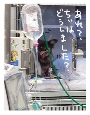 犬 心臓病 保護 手術 心臓 僧帽弁閉鎖不全症 僧帽弁 埼玉 狭山 かんの 菅野先生 ハート イラスト 絵 まんが 漫画 マンガ
