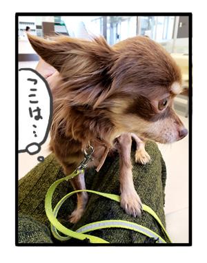 犬 心臓病 保護犬 吐 急性 胃炎 吐き止 点滴 急患 チワワ 多頭 手術 元保護犬 引取 埼玉 イラスト 絵 まんが 漫画 マンガ