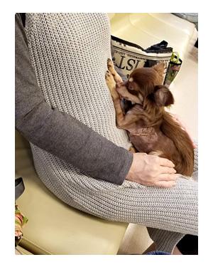 犬 心臓病 保護犬 老犬 チワワ 多頭 手術 術後 検査 嘔吐 下痢 吐く 埼玉 イラスト 絵 まんが 漫画 マンガ
