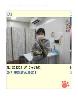 猫 保護猫 ほご レスキュー シマ トラ ネコ 皮膚病 はげ イラスト 絵 まんが 漫画 マンガ