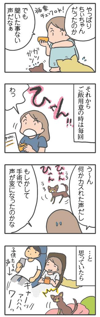 犬 心臓病 甘え 慣れ 里親 保護犬 老犬 チワワ 多頭 手術 元保護犬 イラスト 絵 まんが 漫画 マンガ