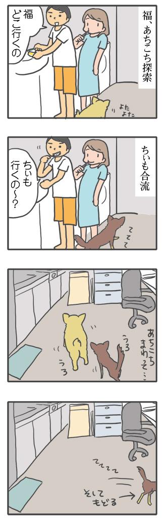 犬 寝る 前 ナイト るーてぃん ルーテイン 習慣 ナイト 老 16歳 心臓病 保護犬 老犬 チワワ 多頭 イラスト 絵 まんが 漫画 マンガ