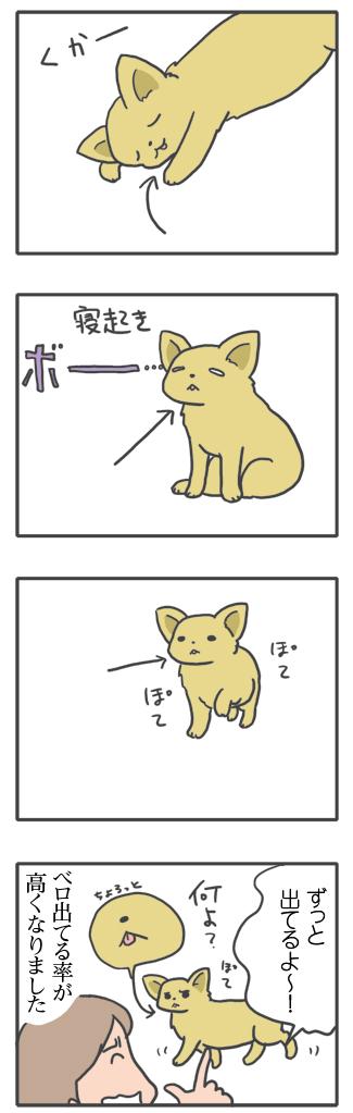 犬 あるある 老犬 老人 舌 歯 ベロ 高齢 爺 婆 ワン 心臓病 里親 保護犬 チワワ 多頭 イラスト 絵 まんが 漫画 マンガ