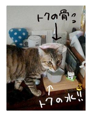 猫 ネコ 保護 水 お供え 飲む トク お骨 先住 保護猫 キー キーウィ 虎 骨 水 イラスト 老犬 絵 まんが 漫画 マンガ