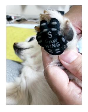 犬 paw wing パウ ウイング 肉球 老犬 高齢 足 滑る 滑り 靴下 シール パッド 老犬 筋力 ワン 心臓病 里親 保護犬 チワワ 多頭 イラスト 絵 まんが 漫画 マンガ
