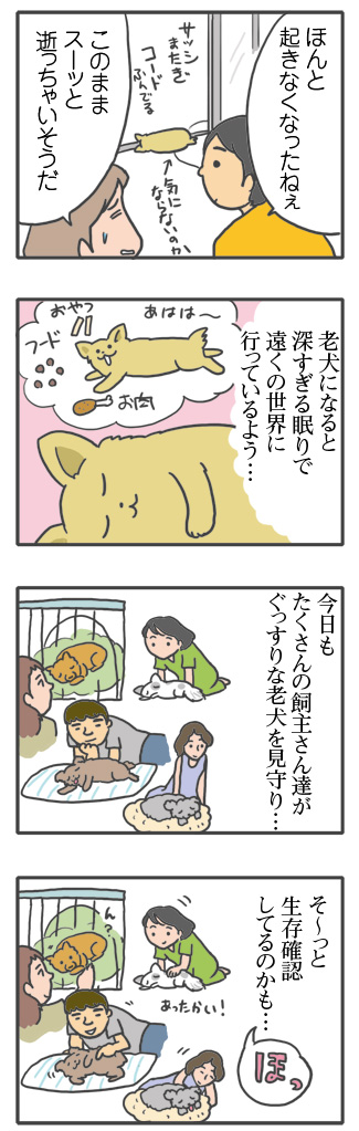 犬 あるある 老犬 老人 高齢 爺 婆 ワン 心臓病 里親 保護犬 チワワ 多頭 手術 元保護犬 イラスト 絵 まんが 漫画 マンガ