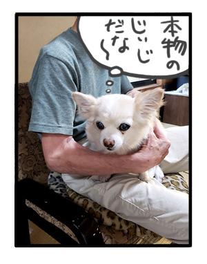 犬 家族 集合 初 対面 唐揚 骨 会合 ワンコ 癌 ガン 分子標的薬 抗がん剤 老犬 老人 高齢 爺 心臓 保護犬 チワワ 手術 元保護犬 イラスト 絵 まんが 漫画 マンガ