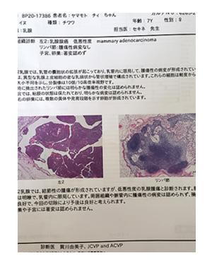 犬 乳腺 腫瘍 手術 摘出 細胞 診断 部位 検査 胸水 ステロイド 発作 癌 ガン 分子標的薬 抗がん剤 老犬 心臓 保護犬 チワワ イラスト 絵 まんが 漫画 マンガ