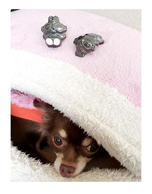 犬 土偶 遮光器 遮光 どぐう 眠 顔 似て ちぃ 福 心臓 保護犬 チワワ イラスト 絵 まんが 漫画 マンガ