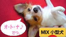 犬ブログ MIX小型犬へ