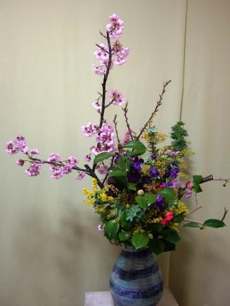 ゆきわり桜