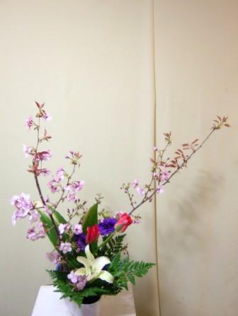 センダイヤ 桜