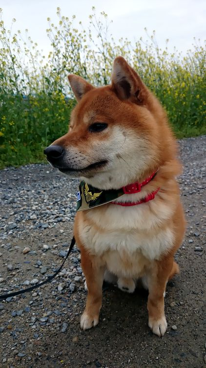 犬のスカーフ
